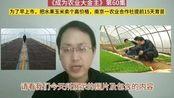 为了让水果玉米早上市卖个高价,南京一农业合作社提前15天育苗